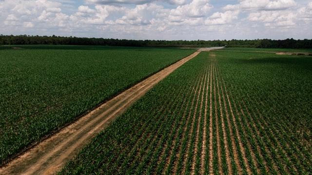 Agromitos: Xico Graziano desvenda os 10 mais comuns