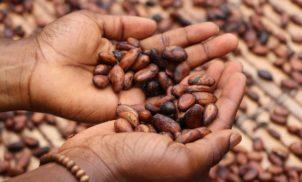 Fungos encontrados nas sementes misteriosas: 23 estados já receberam