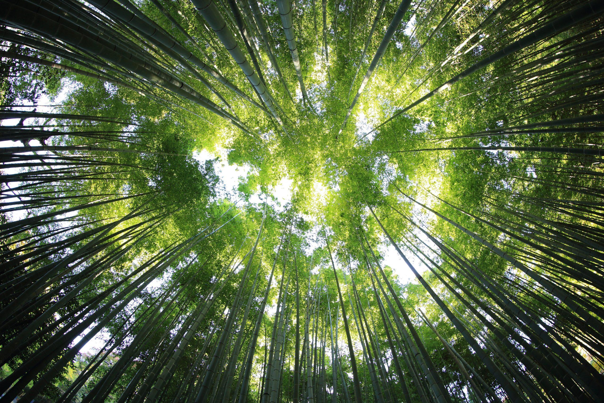 Unesco ajuda na concessão de parques nacionais