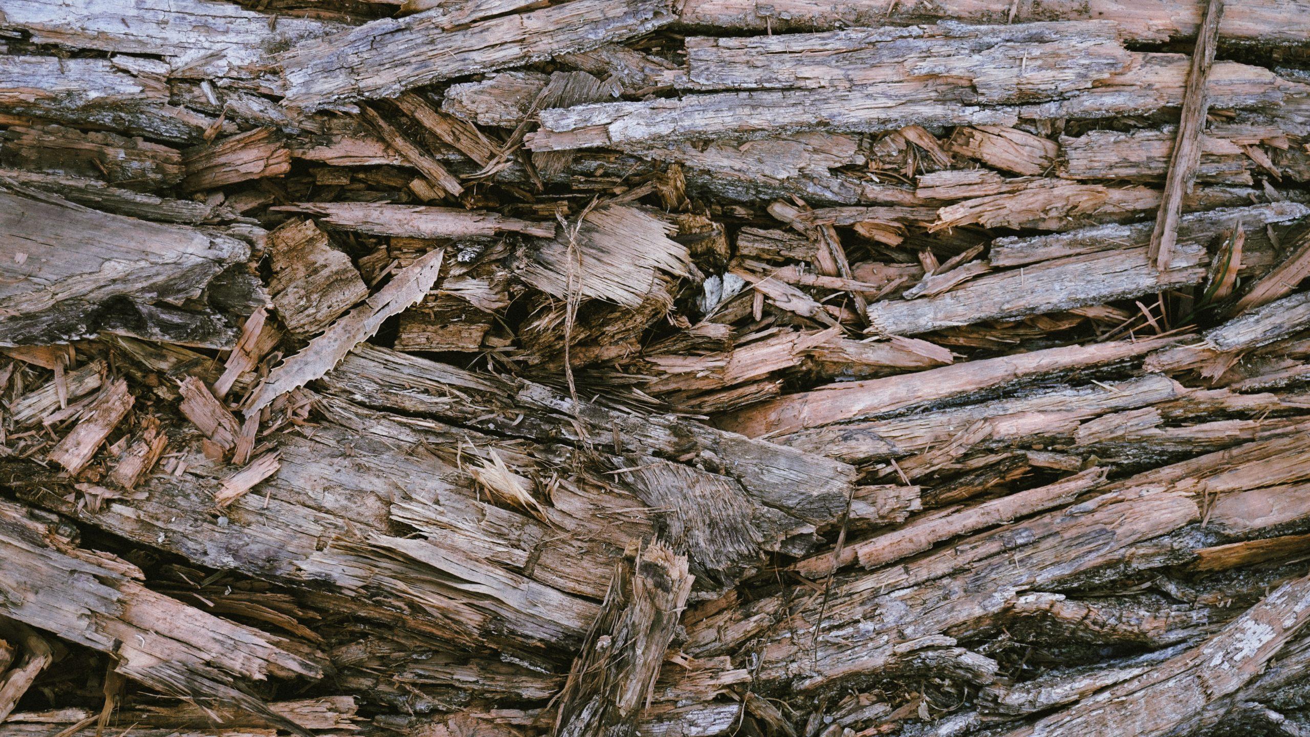 """China e Europa lideram desmatamento por """"importação"""", diz WWF"""